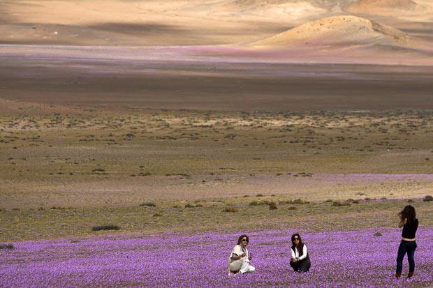 http://www.viabrblog.com.br/wp-content/uploads/2011/11/Atacama-flores-4.jpg