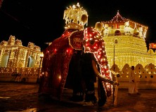 The great tusker of the Sri Dalada Maligawa carrying the scared tooth relic of Lord Buddha stands at the entrance of the temple during the Esala Perahera festival in Kandy
