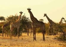 O parque de Kalahari foi aberto ao turismo apenas em 1998, o que deu muitos anos para uma impressionante preservação de sua flora e, principalmente, sua fauna, que conta com girafas, leões, hienas, e outros animais, além de populações aborígenes