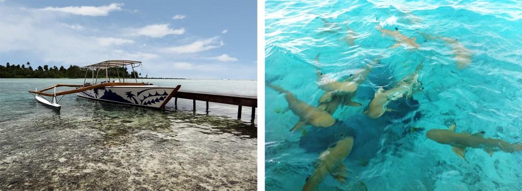Embarcação típica Tahitiana e Nado com tubarões e arraias em Bora Bora