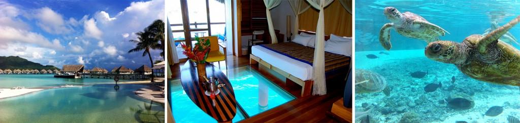 Hotel Le Meridien em Bora Bora: Bangalo com chão de vidro e o projeto Tartarugas.