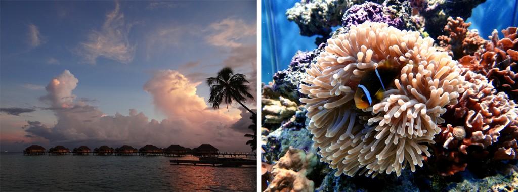 Por do sol e corais em Taha'a